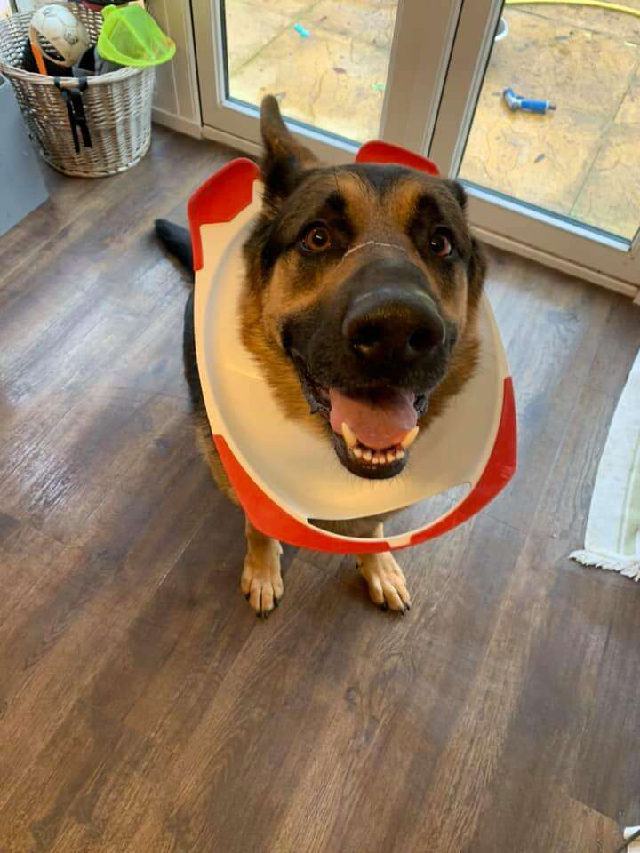 dog gets toilet seat stuck on head