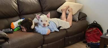 dog lays on top of kid