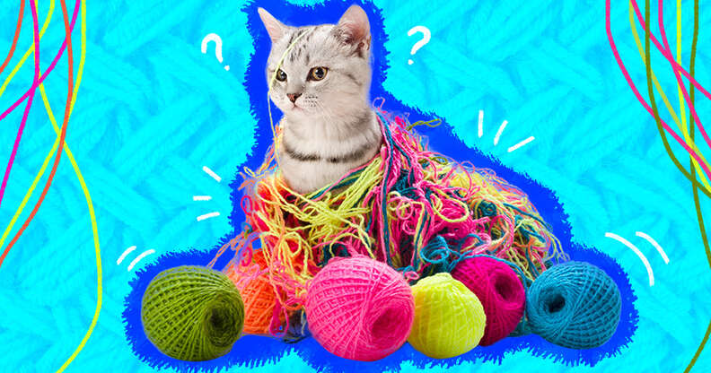 kitten tangled in yarn
