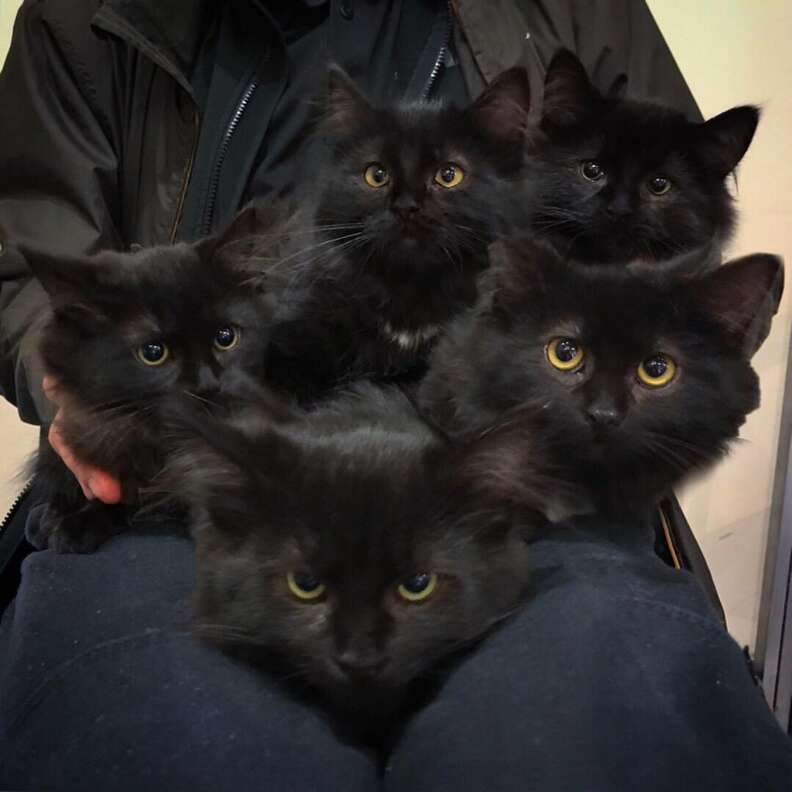 Stray Cat Introduces All Her Kittens To Woman She Trusts The Dodo