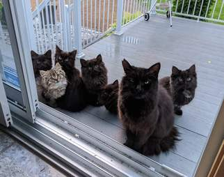 Stray cat shows off her kittens on lady's porch
