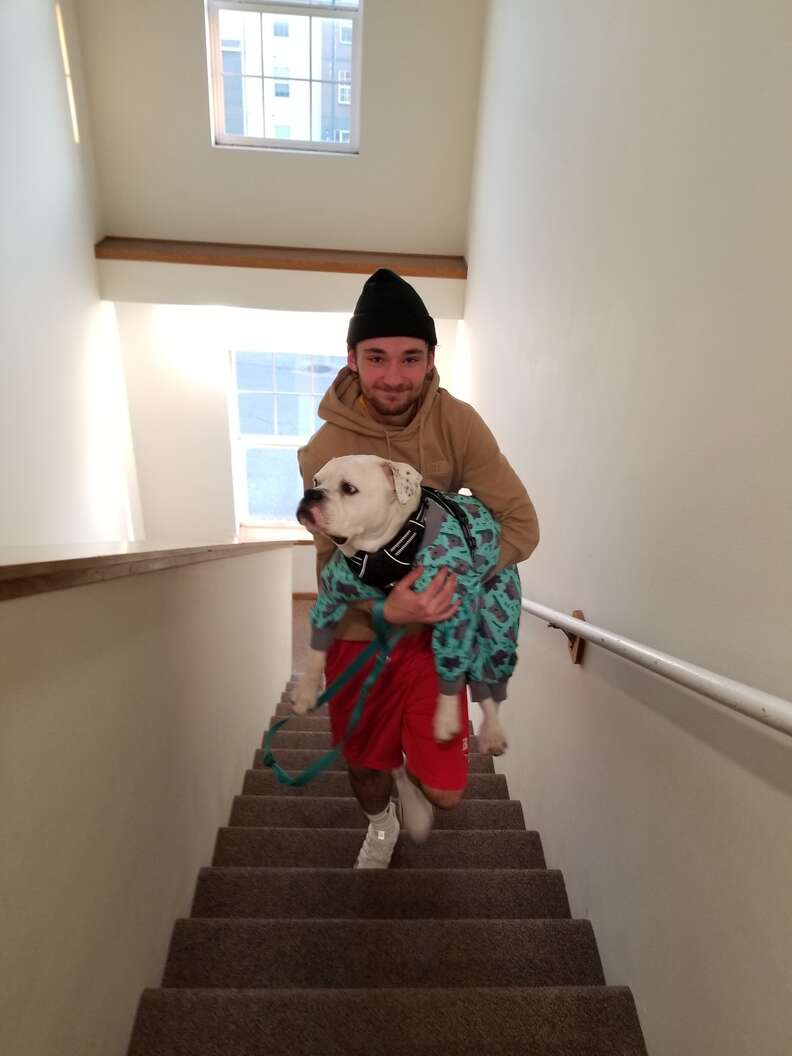 dog gets carried up the stairs