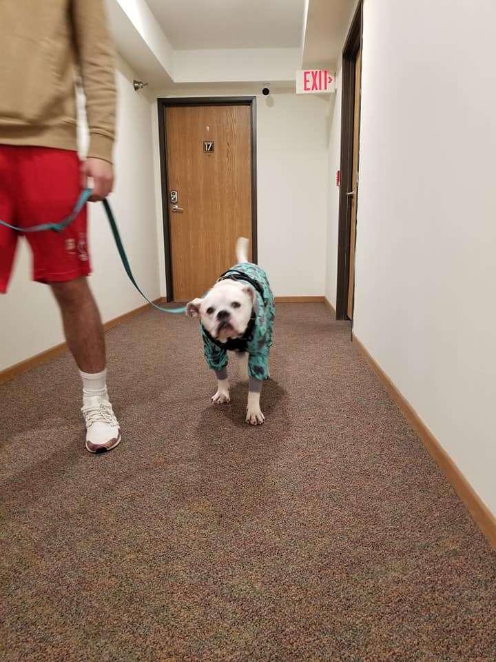 dog walking down hallway