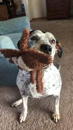 dog holding toy