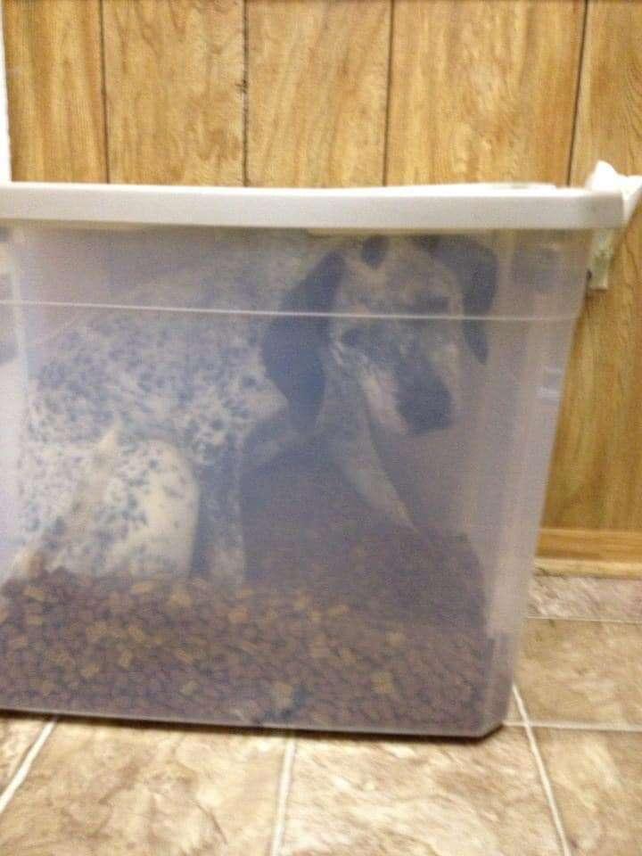 dog in food bin