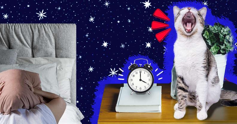 cat waking up