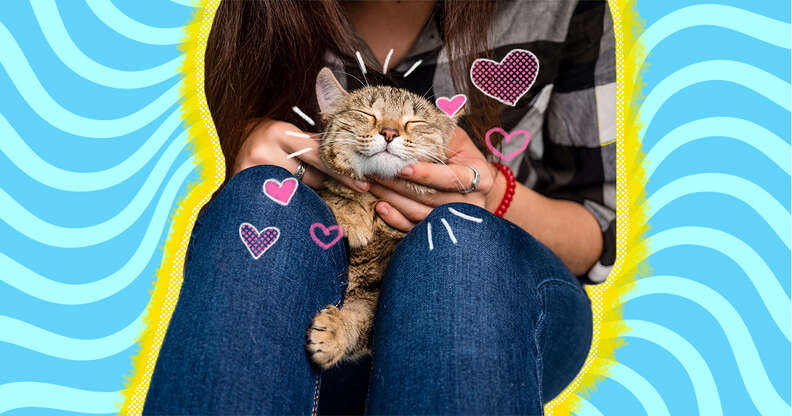 how to show your cat you love him
