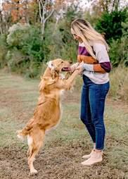 Pregnant dog gets maternity photoshoot