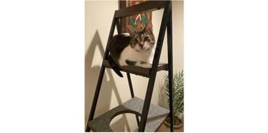 cat on modern furniture