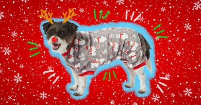 dog in Christmas pajamas