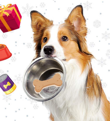 The Best Gifts For Foodie Dogs (And Their Parents)