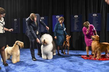 national dog show 2019
