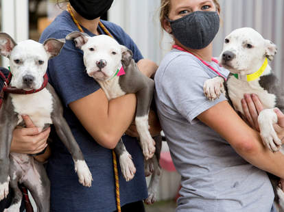 dogs at Rescued Pets Movement