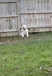 dog squeezes under fence
