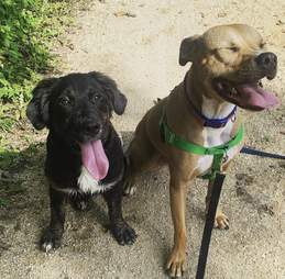 dogs on a hike