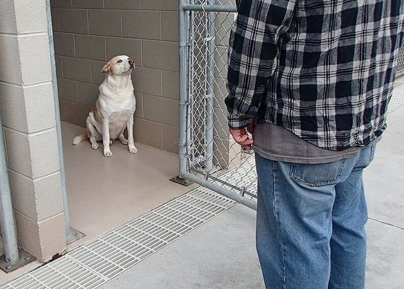 Tennessee shelter dog reunites with his dad