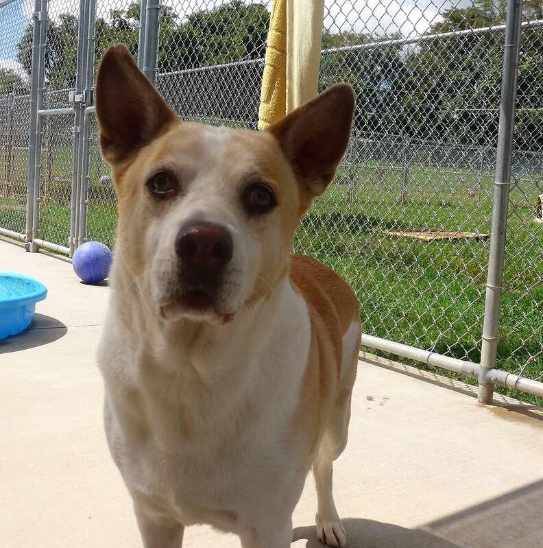 Roscoe the sad shelter dog