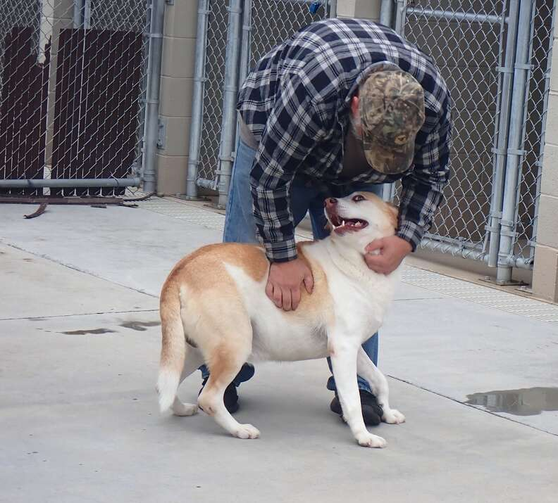 Lost dog is so happy his dad found her
