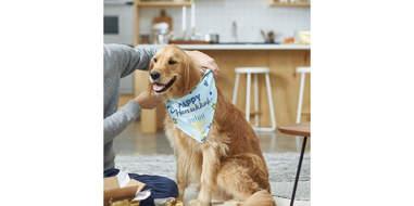 personalized hanukkah dog bandana