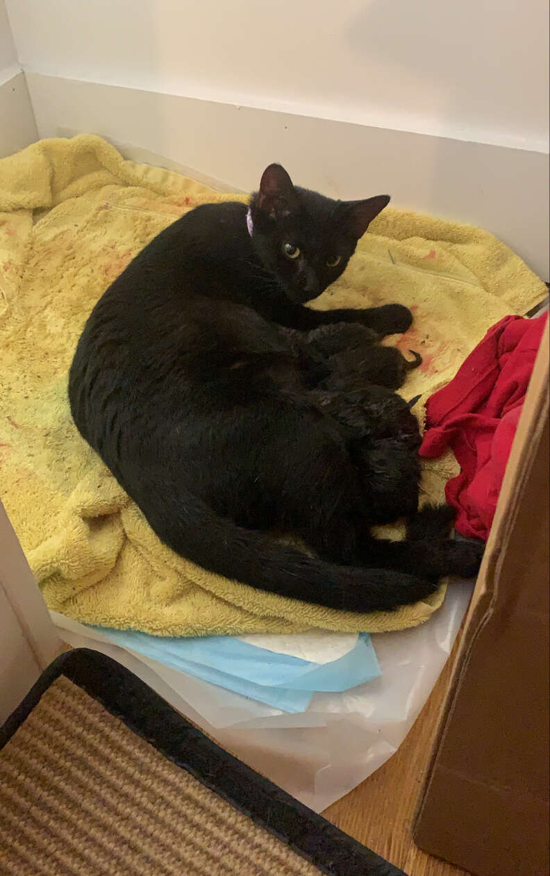 Stray cat gives birth to kittens in apartment