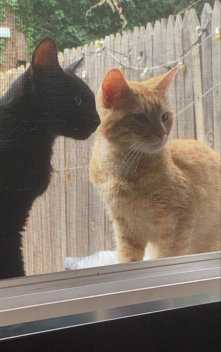 Cat couple asks to be let inside