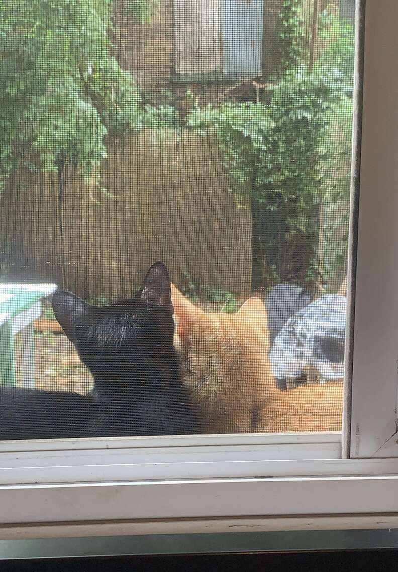 Stray cat couple snuggles on windowsill