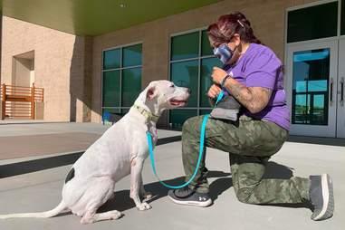 Animal Foundation dog