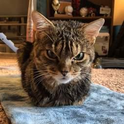 Angriest-looking cat is very loving