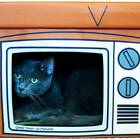 Cat TV House