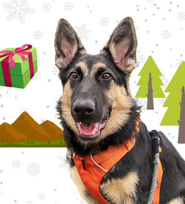 The Best Gifts For Adventurous Dogs (And Their Parents)