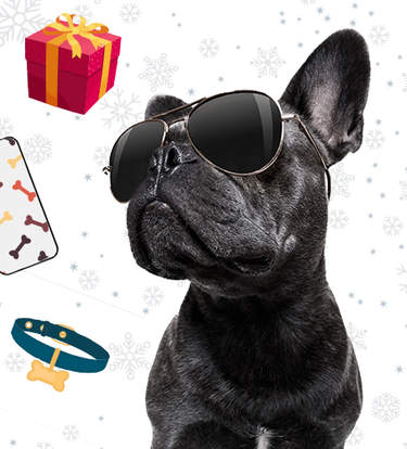 The Best Gifts For Influencer Dogs (And Their Parents)