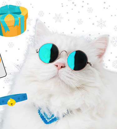 The Best Gifts For Influencer Cats (And Their Parents)