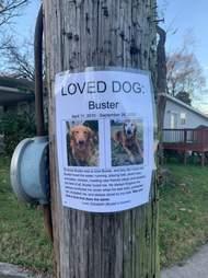 Loved dog poster on pole