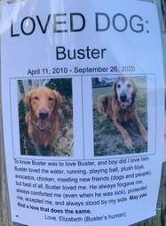 Woman finds a Loved Dog memorial poster
