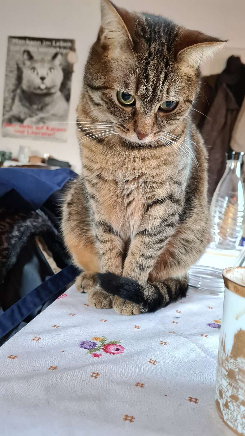 cat sits on table
