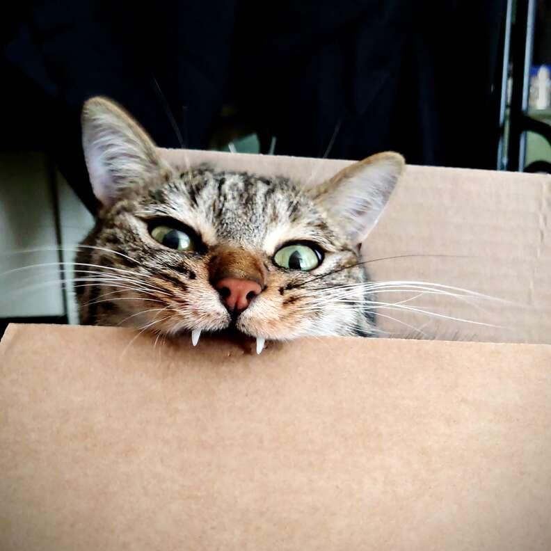 cat bites table