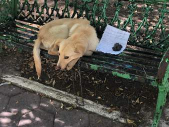 Dog left on a bench with a note