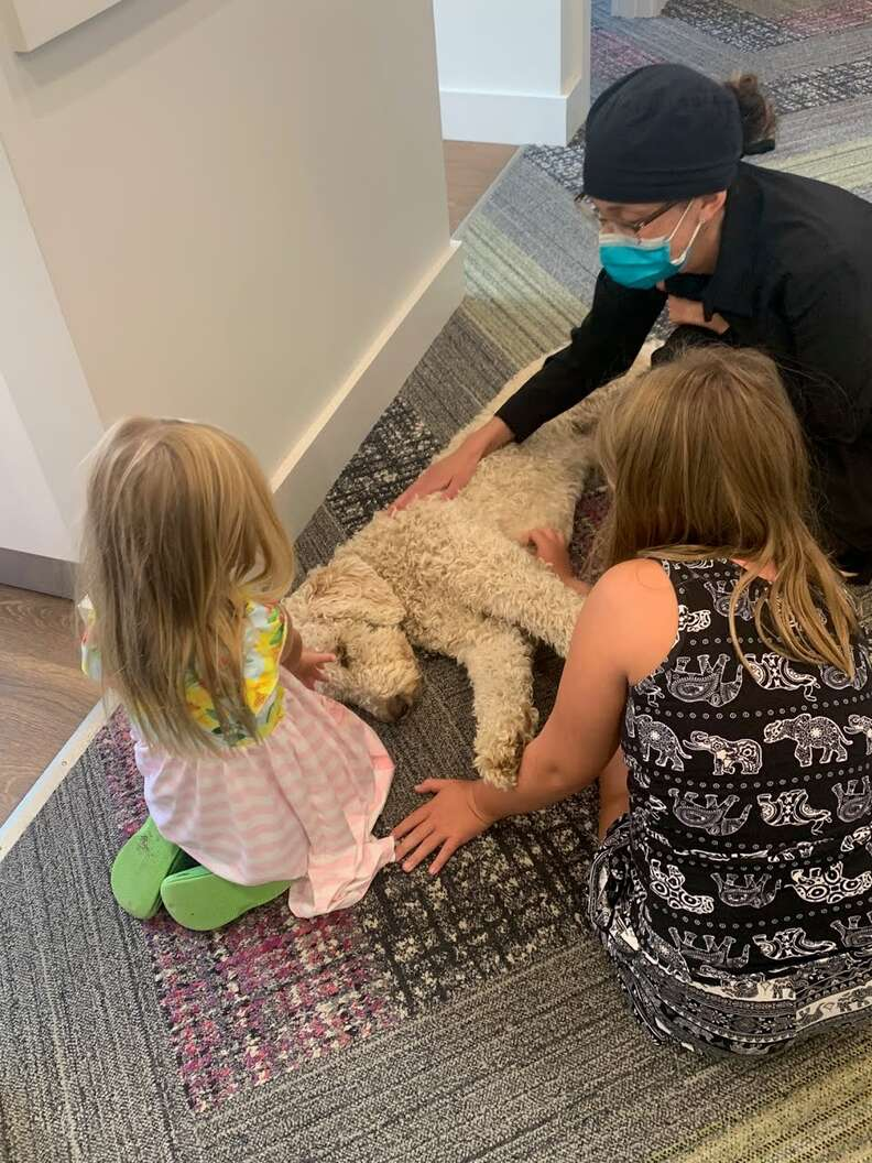 Therapy dog helps out at dentist's office