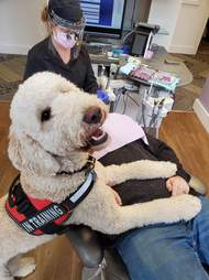 Dwight the therapy dog comforts a patient