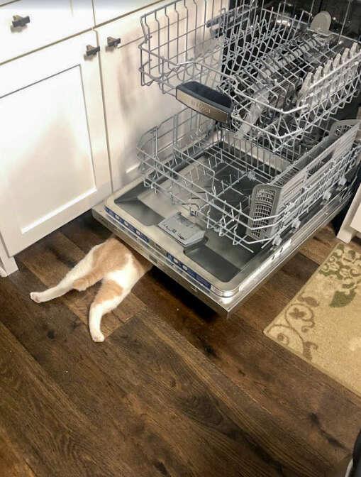 cat hides