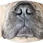 French Bulldog Mouth Face Mask