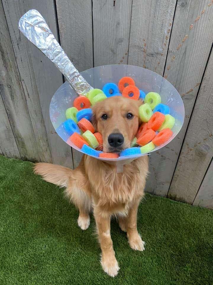 dog cone