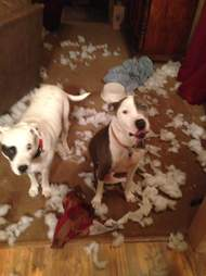 dogs destroy Christmas tree