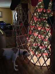 dog looks at Christmas tree