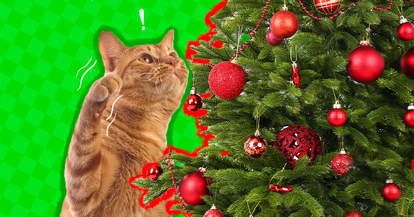 cat proof christmas tree ornament