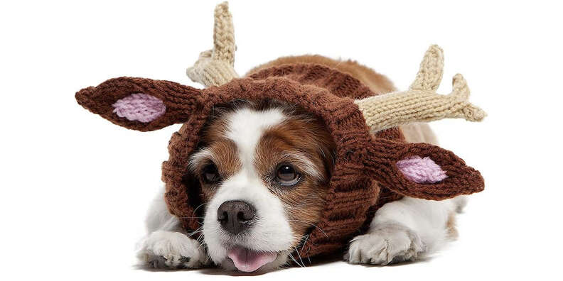 reindeer dog snood