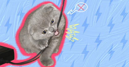 cat chewing cords
