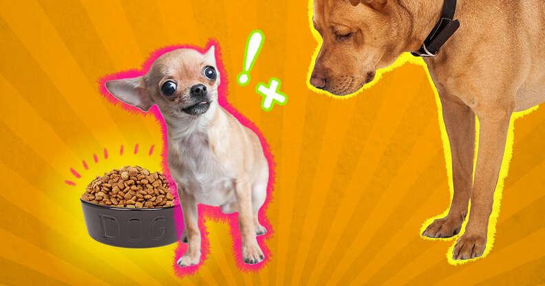 Dog possessive over food