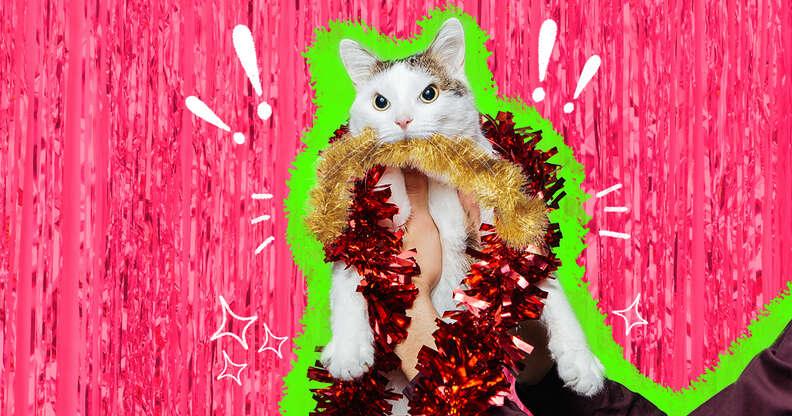 cat ate tinsel
