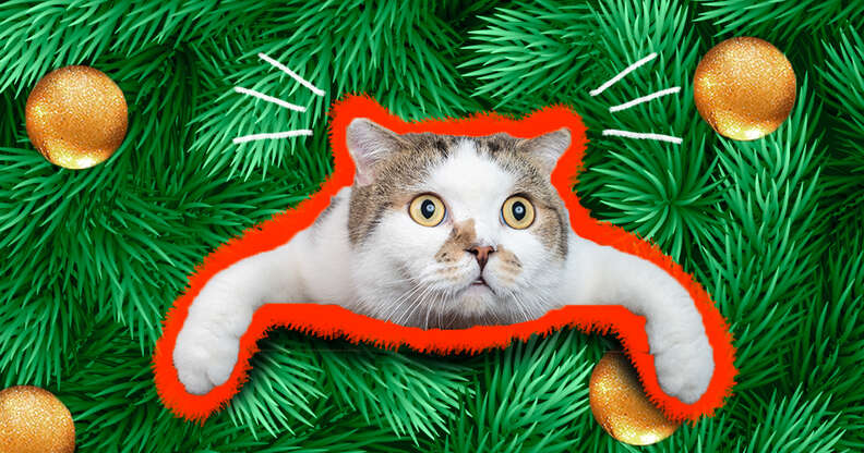 cat in a Christmas tree with ornaments